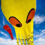 @windscapekitefestival's profile picture