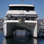 @whale_watch_western_australia's profile picture