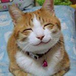@catrice's profile picture