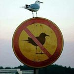 @manolissavvidis's profile picture on influence.co