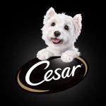@cesarcuisine's profile picture on influence.co