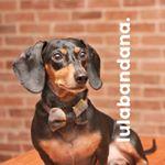 @lulabandana's profile picture on influence.co