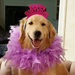 @thebirthdaypuppy's profile picture
