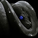 @black_snake_photo's profile picture