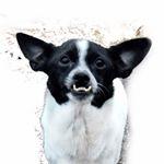 @winstonhasanunderbite's profile picture on influence.co