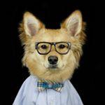 @milo.da.mutt's profile picture on influence.co