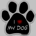@doglovers.contact's profile picture on influence.co