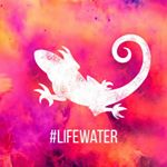 @lifewaterchile's profile picture