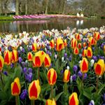 @visitkeukenhof's profile picture on influence.co