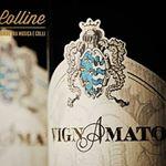@cantinavignamato's profile picture