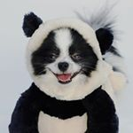@pandaloonpuppy's profile picture on influence.co