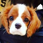 @aspen_the_cav's profile picture on influence.co