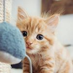 @dailycatclub's profile picture on influence.co