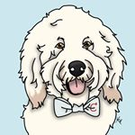 @charliegoldthedoodle's profile picture on influence.co