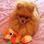 @mydogtown's profile picture