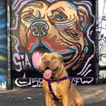 @siatheboerboel's profile picture on influence.co