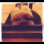 @thursdayplantation's profile picture
