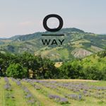 @oway_uk's profile picture on influence.co