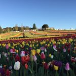 @tesselaar_tulip_festival's profile picture