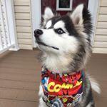 @copilotcollections's profile picture