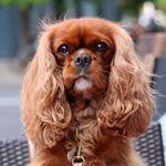 @ameliathecav's Profile Picture
