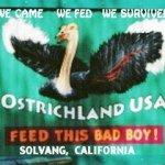 @ostrichland's profile picture