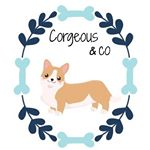 @corgeous.co's profile picture