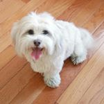 @hans_the_shichon's profile picture on influence.co