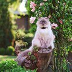 @felineflora's profile picture on influence.co