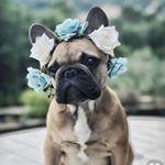 @bulldoggiestore's profile picture on influence.co