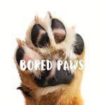 @boredpaws's Profile Picture
