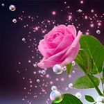 @ssurajj_guptaa's profile picture on influence.co