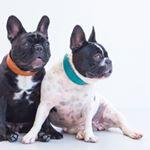 @vagabond_dogs's profile picture