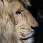@lionspridegoods1's profile picture on influence.co