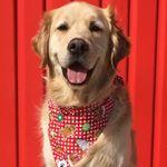 @cooper.and.company's profile picture