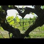 @gigi_carrinho_wine's profile picture on influence.co
