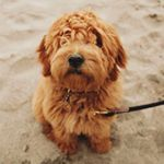 @reese.the.doodle's profile picture on influence.co