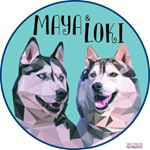 @mayalokihusky's profile picture on influence.co