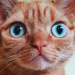 @buggy_supercat's profile picture on influence.co