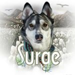 @adventure.husky's profile picture on influence.co