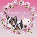 @nordicbullies's profile picture on influence.co