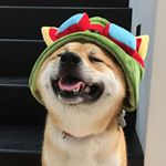 @donuttheshiba's profile picture on influence.co
