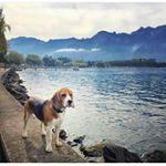 @beagle_corner's profile picture on influence.co
