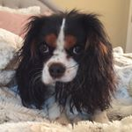 @scout_thecav's Profile Picture