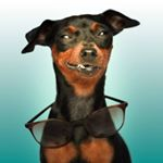 @rubi_the_pinscher's profile picture on influence.co