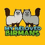 @amigo_melissa_beloved_birmans's profile picture on influence.co