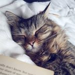 @meowing_box's profile picture on influence.co