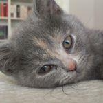 @britishmilow's profile picture on influence.co