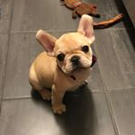 @thefrenchiehobbes's Profile Picture