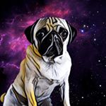 @arf.art.colorado's profile picture